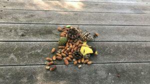石神井公園のテーブルに置かれていた作品